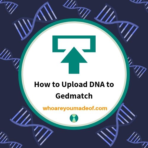 How to Upload DNA to Gedmatch