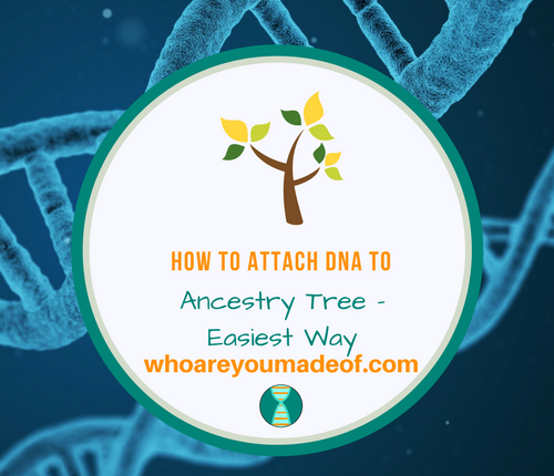 How to Attach DNA to Ancestry Tree - Easiest Way