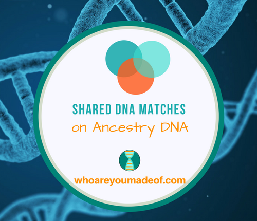 What are Shared Matches on Ancestry DNA_