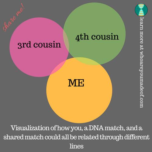 visualization of a shared DNA match
