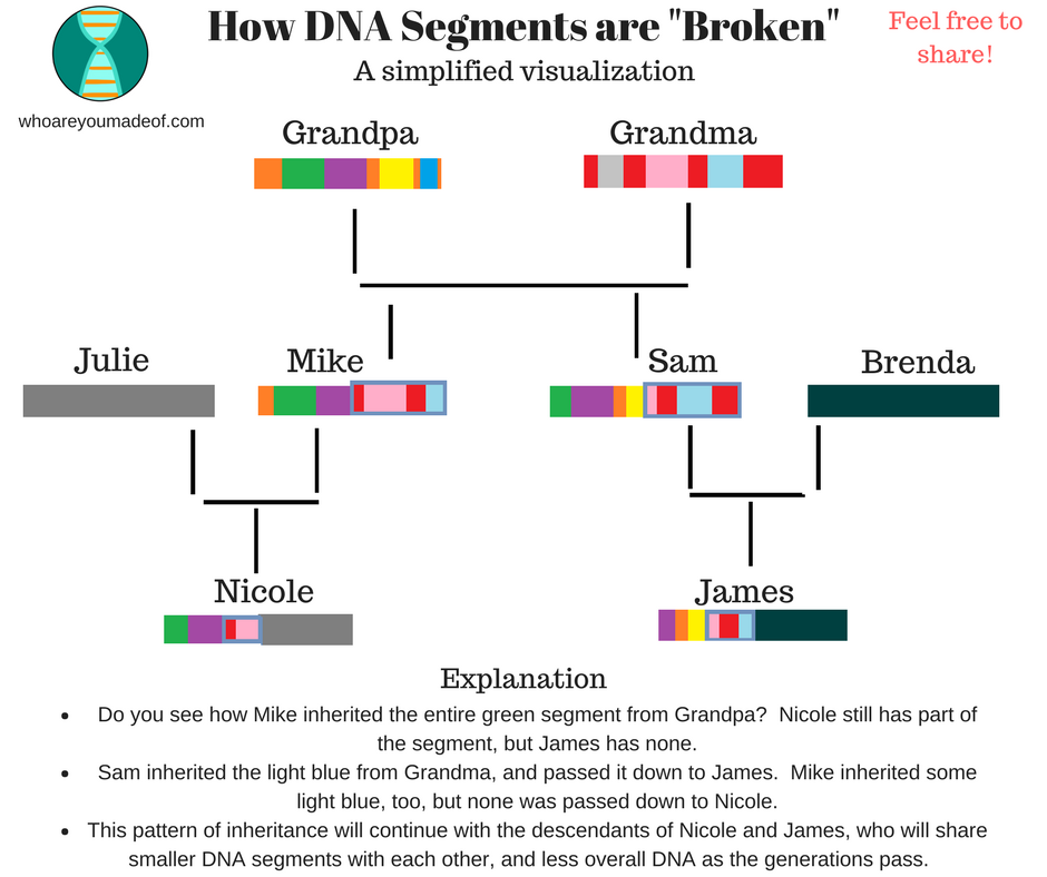 How DNA Segments are Broken up over the generations
