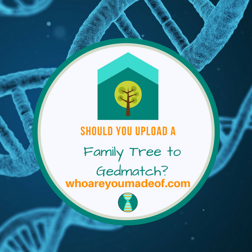 Should You Upload a Family Tree to Gedmatch?