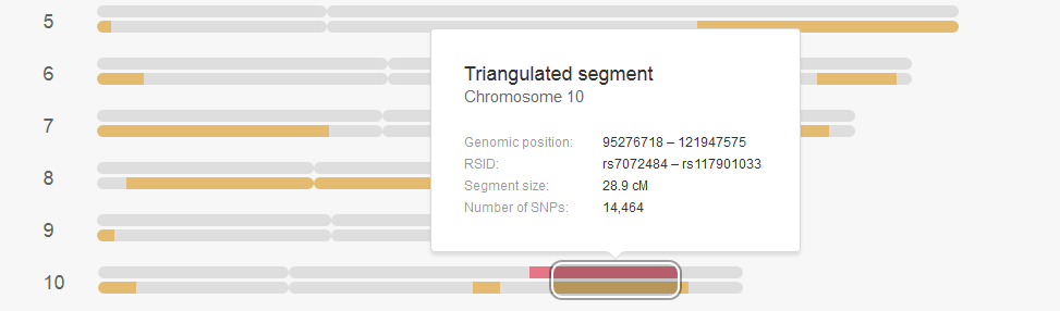 How to view the triangulated segment location on My Heritage DNA, this is an example snapshot from the browser showing a triangulated segment on chromosome 10