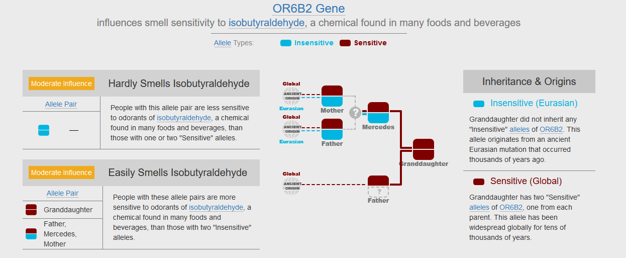 OR6B2 Gene in Grandchild Report on Gene Heritage