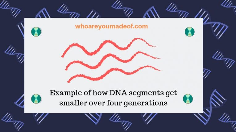 Example of how DNA segments get smaller over four generations