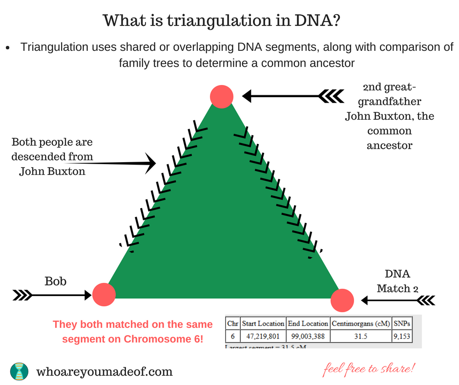 What does triangulation mean?  Triangulation uses shared or overlapping DNA segments, along with comparison of family trees to determine a common ancestor.
