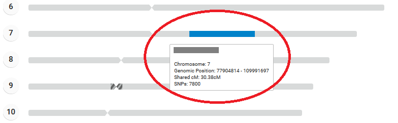 Example of segment shared on chromosome 7 family tree dna