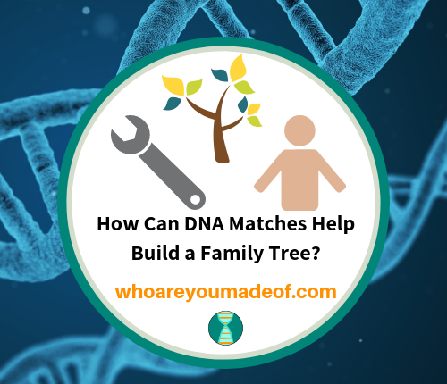 How Can DNA Matches Help Build a Family Tree_