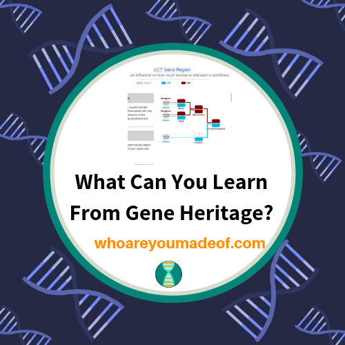 What Can You Learn From Gene Heritage?