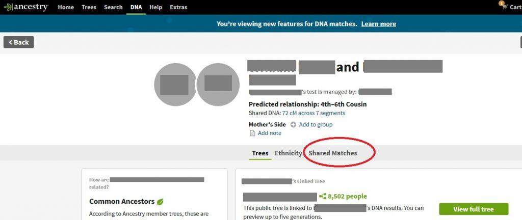 shared matches on ancestry dna match list