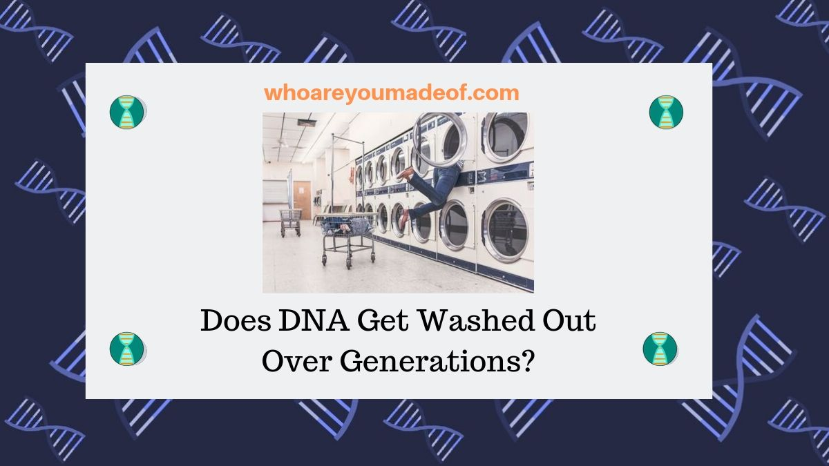 Does DNA Get Washed Out Over Generations_