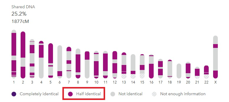 An aunt and niece, sharing 1877 cMs, have only half-identical segments in common on 23andMe results.  Light purple and dark purple illustrate the difference in segments.