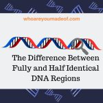 The Difference Between Fully and Half Identical DNA Regions