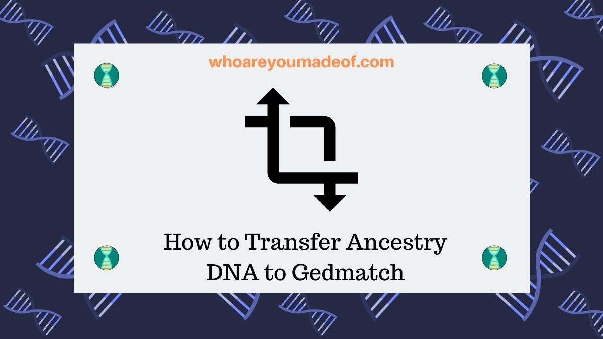 How to Transfer Ancestry DNA to Gedmatch