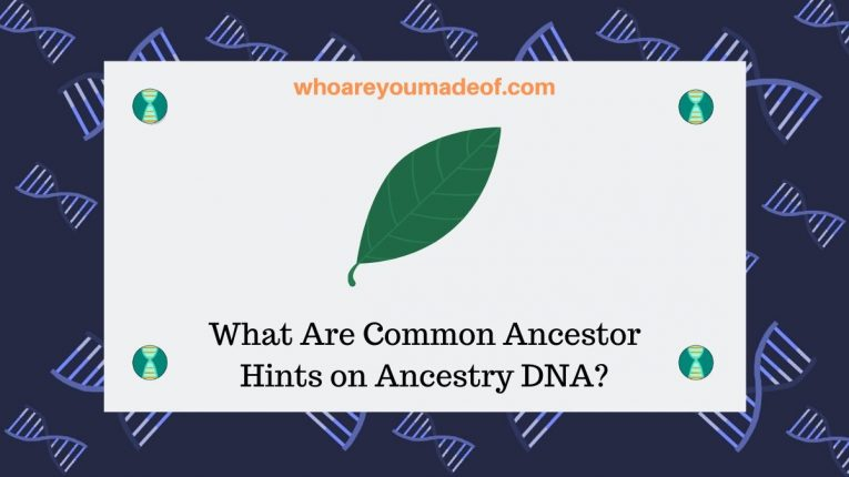 What Are Common Ancestor Hints on Ancestry DNA_