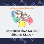 How Much DNA Do Half Siblings Share_