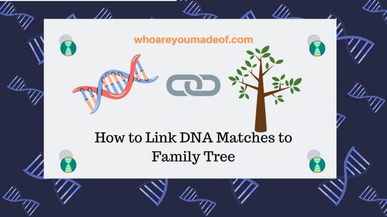 How to Link DNA Matches to Family Tree
