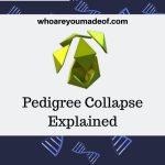 Pedigree Collapse Explained