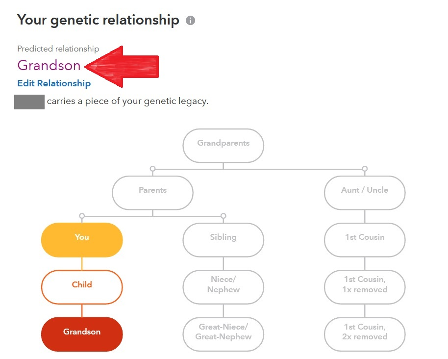 Red arrow points to Grandson, the predicted relationship on 23andMe.  Graphic also includes relationship chart showing how DNA match (grandson) is possibly related