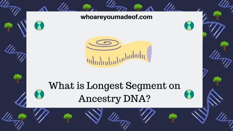 What is Longest Segment on Ancestry DNA