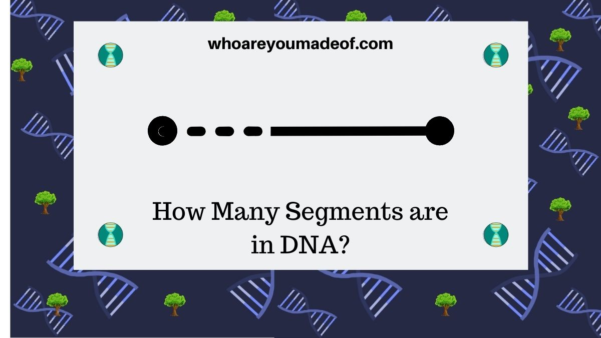How-Many-Segments-are-in-DNA-