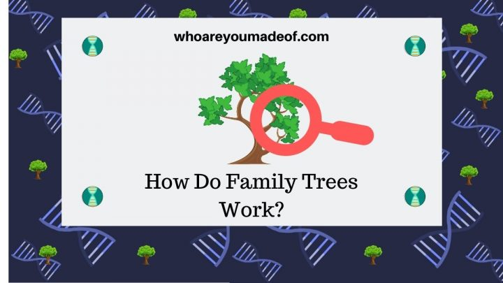 How Do Family Trees Work (1)