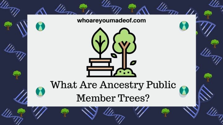 What Are Ancestry Public Member Trees