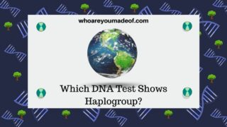Which DNA Test Shows Haplogroup (1)