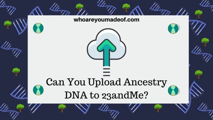 Can You Upload Ancestry DNA to 23andMe?