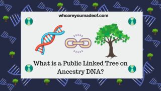 What is a Public Linked Tree on Ancestry DNA?