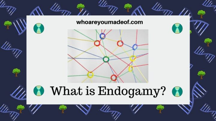 What is Endogamy
