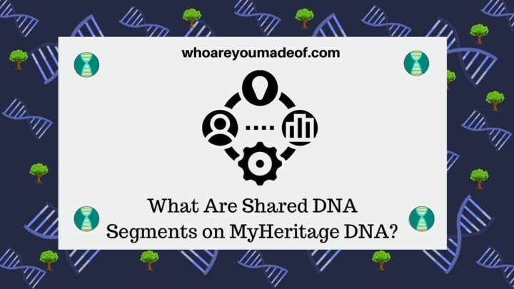 What Are Shared DNA Segments on MyHeritage DNA